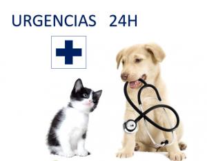 Clínica Veterinaria El Cabo en Alicante - Hospital Veterinario 24H