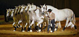 Королевская школа верховой езды: выездка как высокое искусство